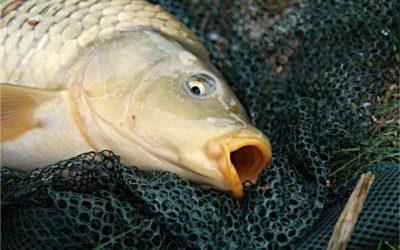 Winter Carp Fishing Tips