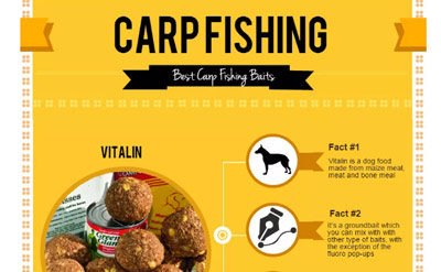 Basics of Carp Fishing for Beginners – Infographic
